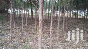 Eucalyptus Forest For Sell | Farm Machinery & Equipment for sale in Eastern Region, Tororo