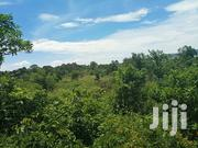 23 Fertile Squire Miles on Quick Sale in Masindi With Title No Scoter | Land & Plots For Sale for sale in Central Region, Kampala