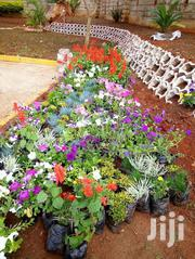 The Best Compound And Landscape Designer In Town | Landscaping & Gardening Services for sale in Central Region, Kampala