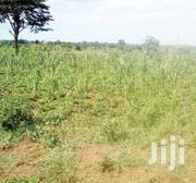 25 Acres Land In Eastern Uganda With Swamps For Sale | Land & Plots For Sale for sale in Eastern Region, Soroti
