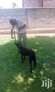 DOG TRAINER | Dogs & Puppies for sale in Central Region, Wakiso