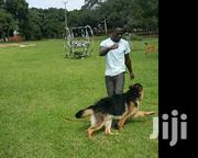 Dog Training & Vet Services | Pet Services for sale in Central Region, Kampala