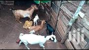 Goats | Livestock & Poultry for sale in Central Region, Kampala