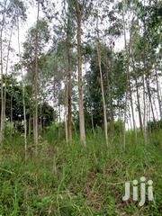 Land With Eucalyptus Trees For Sale | Land & Plots For Sale for sale in Central Region, Mukono