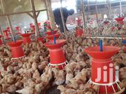 Umar And Family Poultry Project | Livestock & Poultry for sale in Eastern Region, Mbale