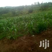 50 Acres Of Land For Rent | Land & Plots for Rent for sale in Western Region, Kamwenge