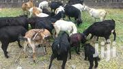 Goats For Sale | Livestock & Poultry for sale in Central Region, Kampala