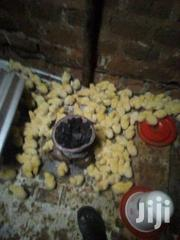 I Day Kroilers Broilers N Layers | Birds for sale in Central Region, Wakiso