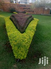 Compound Design, Shaping, Planting Of Flowers, Maintenance | Landscaping & Gardening Services for sale in Nothern Region, Lira