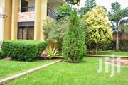 Hybrid South African Natural Grass | Garden for sale in Central Region, Kampala