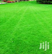 Natural Hybrid Grass | Garden for sale in Central Region, Kampala