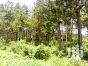17 Acres for Sale 20m.Each in Wasinga Mengo Along Katosi Road Fo5 | Land & Plots For Sale for sale in Central Region, Kampala