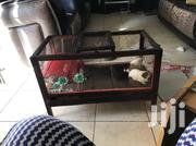 Guinea Pigs en Bunny Cages | Pet's Accessories for sale in Central Region, Kampala