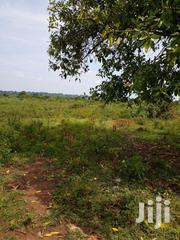 150 Acres Mailo Reduced To 2.2 M Each At Nabiswera Town, Nakasongola | Land & Plots For Sale for sale in Central Region, Nakasongola