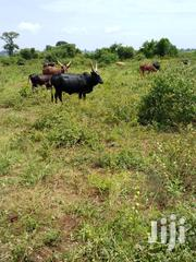 250 Acres Ushs 2M Per Acre, Kyankwanzi Leasehold Convert to Freehold | Land & Plots For Sale for sale in Central Region, Kiboga