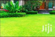 Hybrid Natural Grass 4 Beauty of Home | Garden for sale in Central Region, Kampala