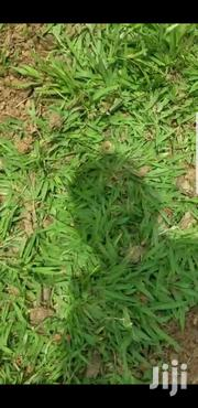 Grass Good Quality | Garden for sale in Central Region, Kampala