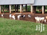 Farm In Luwero Bulemezi For Sale | Land & Plots For Sale for sale in Central Region, Kampala