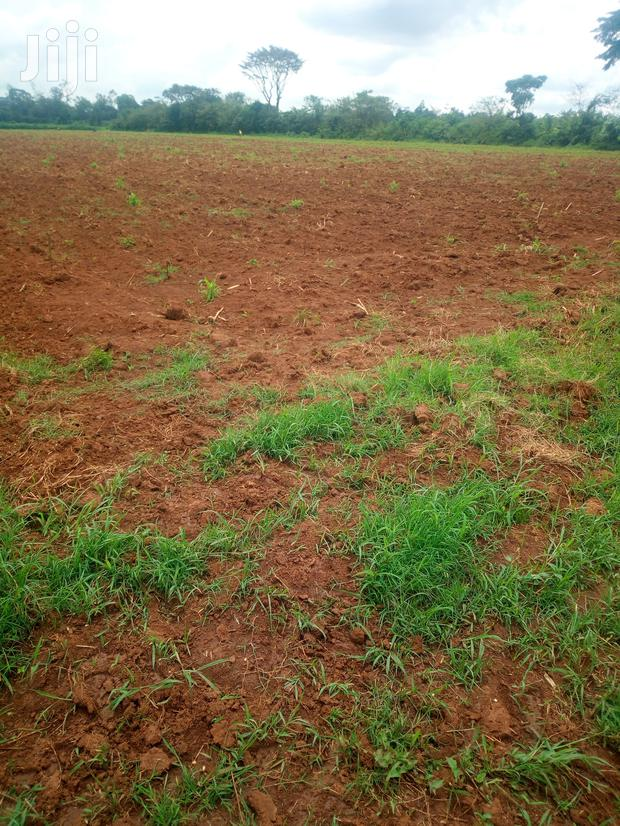 Archive: 5 Acres of Land for Sale