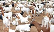 Goat Farm On Sale | Other Animals for sale in Central Region, Kampala