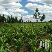 Zirobwe Kikyusa 150 Acres of Land for Sale | Land & Plots For Sale for sale in Central Region, Kampala