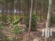 Agroforesty Plantation And Management | Landscaping & Gardening Services for sale in Central Region, Kampala
