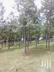 43 Acre of Land With Pine Trees | Land & Plots For Sale for sale in Western Region, Mbarara