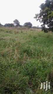 300 Acres of Farm Land in Nakasongola With a Title | Land & Plots For Sale for sale in Central Region, Kampala