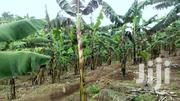 10 Acres of Land for Sale in Butunduzi, Kyenjojo District. | Land & Plots For Sale for sale in Western Region, Kyenjojo