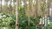 31 Acres of Titled Land With Trees for Sale in Kyenjojo District. | Land & Plots For Sale for sale in Western Region, Kyenjojo