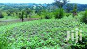 30 Acres of Fertile Land for Sale in Kakabara, Kyegegwa District. | Land & Plots For Sale for sale in Western Region, Kyenjojo