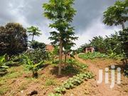 20acers for Sale in Kasanje Kawuku Asking 30m Per Acrer With Title | Land & Plots For Sale for sale in Central Region, Kampala