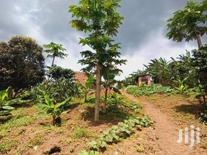 20acers for Sale in Kasanje Kawuku Asking 30m Per Acrer With Title