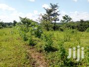 15 Decimals In Gayaza-nakwero For Sale | Land & Plots For Sale for sale in Central Region, Kampala