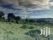 Plotd of 12 Decimals on Quick Sale in Nakawuka Jungo With Lake View | Land & Plots For Sale for sale in Central Region, Kampala