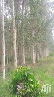 60 Acres of 7 Years Old Payani on Quick Sale Mityana Myanzi With Title | Land & Plots For Sale for sale in Central Region, Kampala