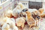 Broilers | Livestock & Poultry for sale in Central Region, Kampala