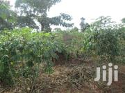 30x50 Plot On Sale At 2.5m In Kabembe, 7km From Mukono Trading Center | Land & Plots For Sale for sale in Western Region, Kisoro