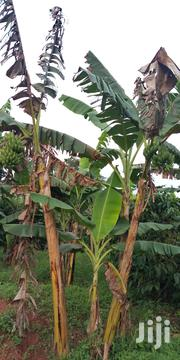 Farm Land 3acres for Sale in Zirobwe Wakatayi | Land & Plots For Sale for sale in Central Region, Luweero