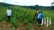 Entebbe Road 25decimals/100ftby100ft Plot | Land & Plots For Sale for sale in Central Region, Wakiso
