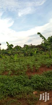 Land In Kikyusa Wabitungulu For Sale | Land & Plots For Sale for sale in Central Region, Luweero