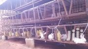 Rabbits For Sale | Livestock & Poultry for sale in Central Region, Kampala