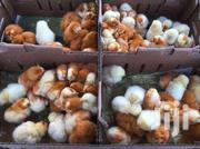 Exotic Kuroilers | Livestock & Poultry for sale in Central Region, Kampala