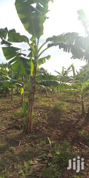 Farm Land 12acres for Sale in Zirobwe Wakasana | Land & Plots For Sale for sale in Central Region, Luweero