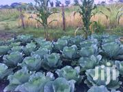 7 Acres Land for Sale Zirobwe | Land & Plots For Sale for sale in Central Region, Luweero