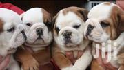 Baby Female Purebred Bulldog   Dogs & Puppies for sale in Central Region, Kalangala