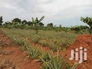 Saling From One Acre Onwards | Land & Plots For Sale for sale in Central Region, Luweero