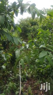 Plot of Land at Kisowera for Sale | Land & Plots For Sale for sale in Central Region, Mukono