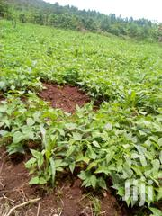 Fertile Farmland | Land & Plots For Sale for sale in Central Region, Luweero