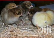 Chickens | Livestock & Poultry for sale in Central Region, Kampala